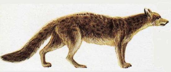 Los ancestros del perro
