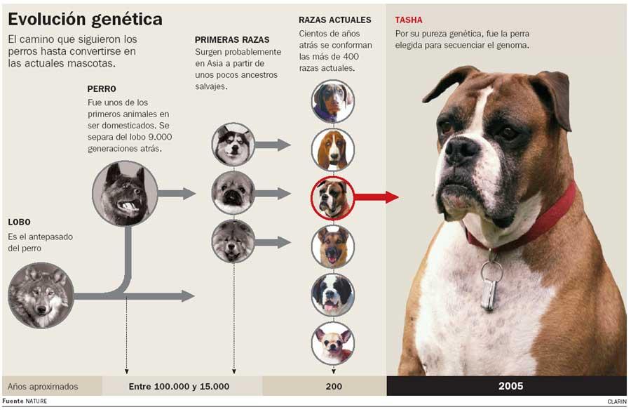 Los antepasados del perro