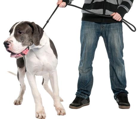 Los errores que se cometen en el paseo del perro