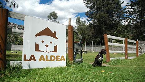 Nuestro hotel para perros en Quito