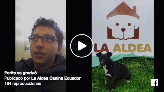 Nuestra escuela para perros rescatados en Quito