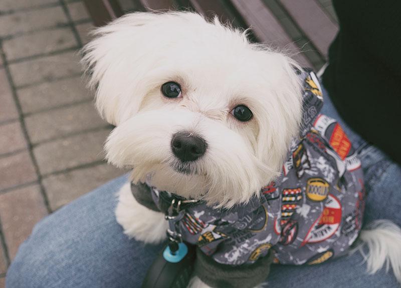La que provoca la humanización del perro
