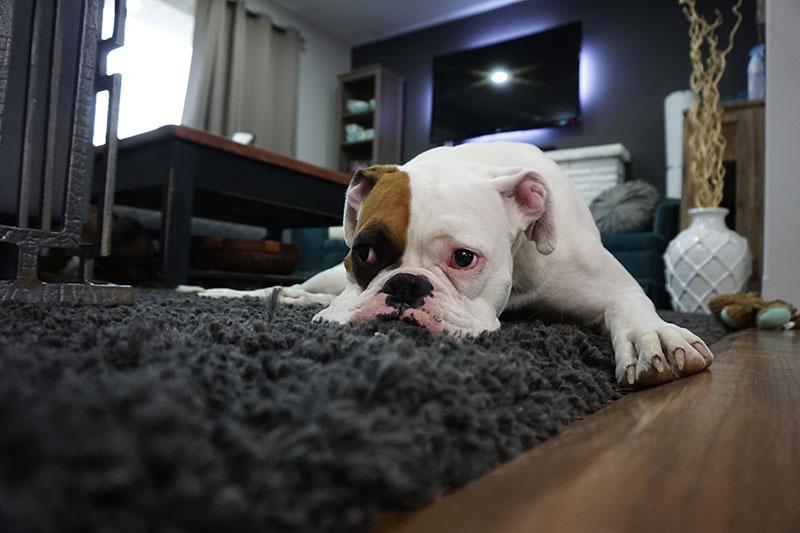 Educar un perro para que haga sus necesidades