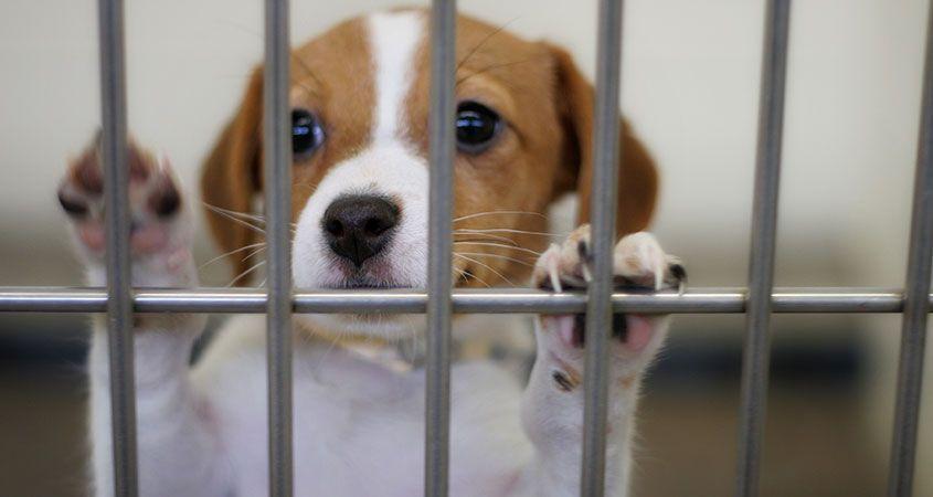 ¿Qué hacer al rescatar un perro?