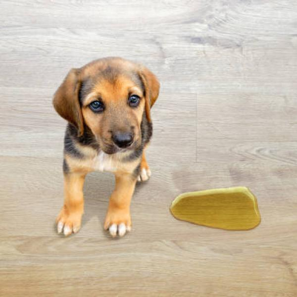 Tragedias en casa, el perro se orinó otra vez