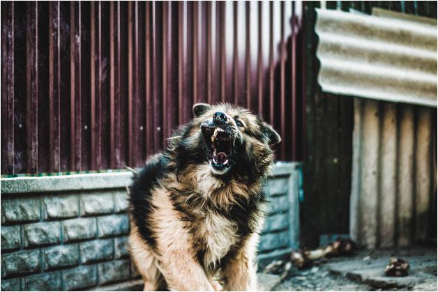 ¿Cuáles son los perros más agresivos?